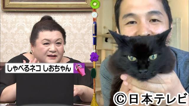 猫 関西 弁 しゃべる